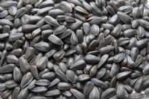 Black Sunflower Seeds 12.75kg